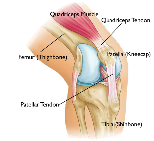 Patellofemoral Pain Syndrome vs Patellar Tendinitis | Kintec